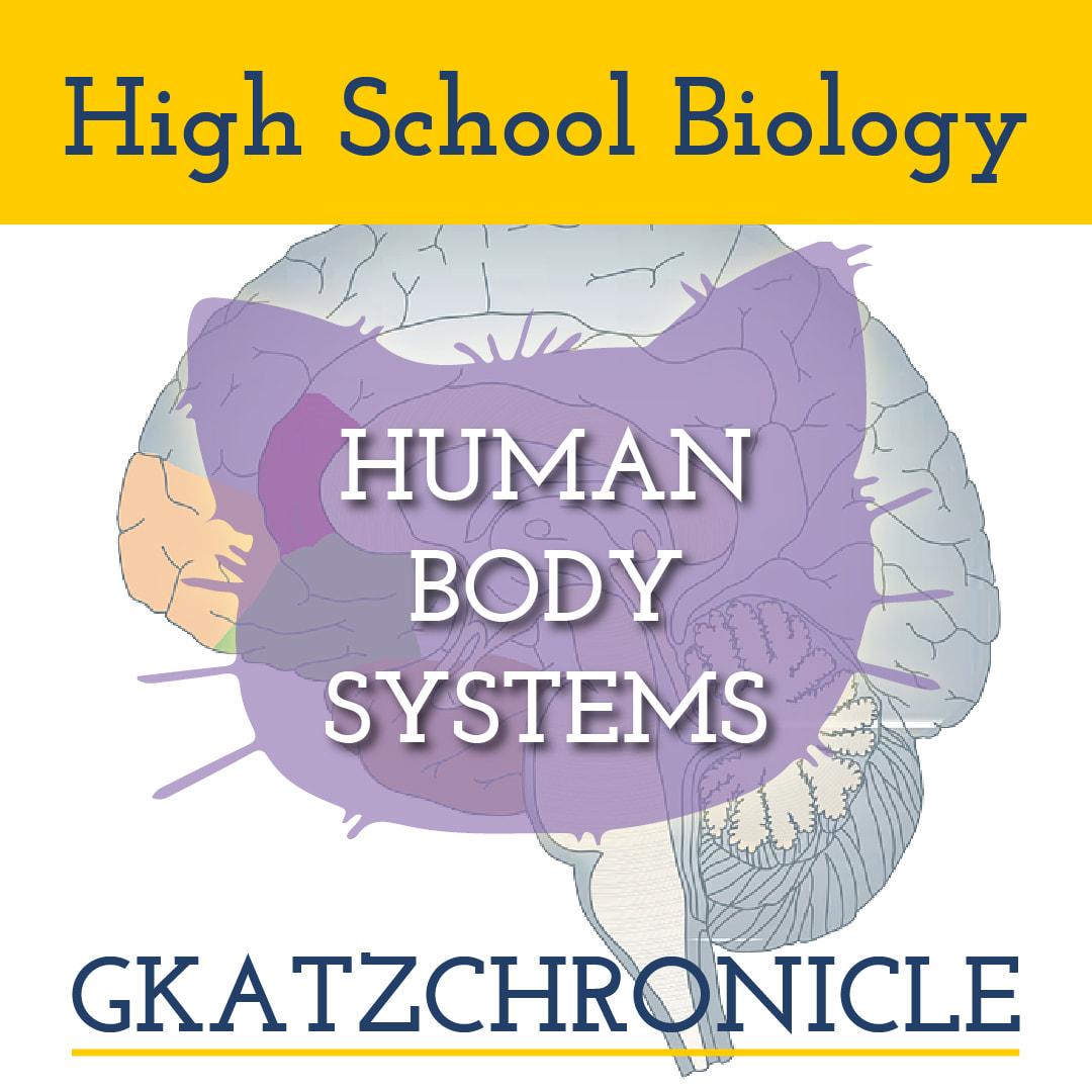 Nervous System Key Concepts