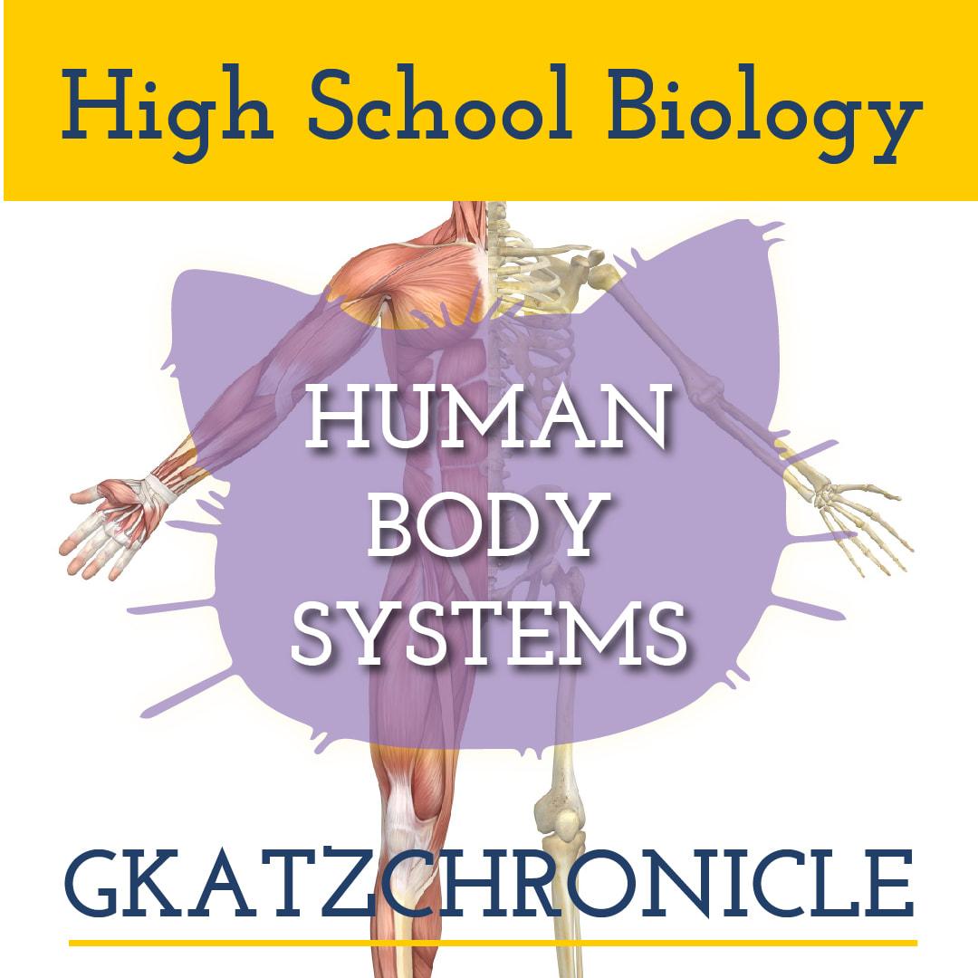 Skeletal Amp Muscular Systems Worksheet