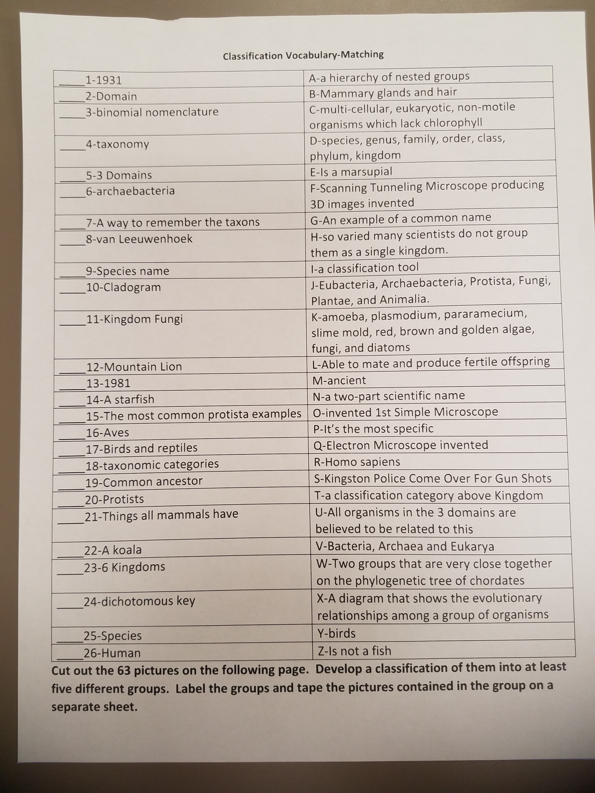 Classification Vocabulary Worksheet Activity