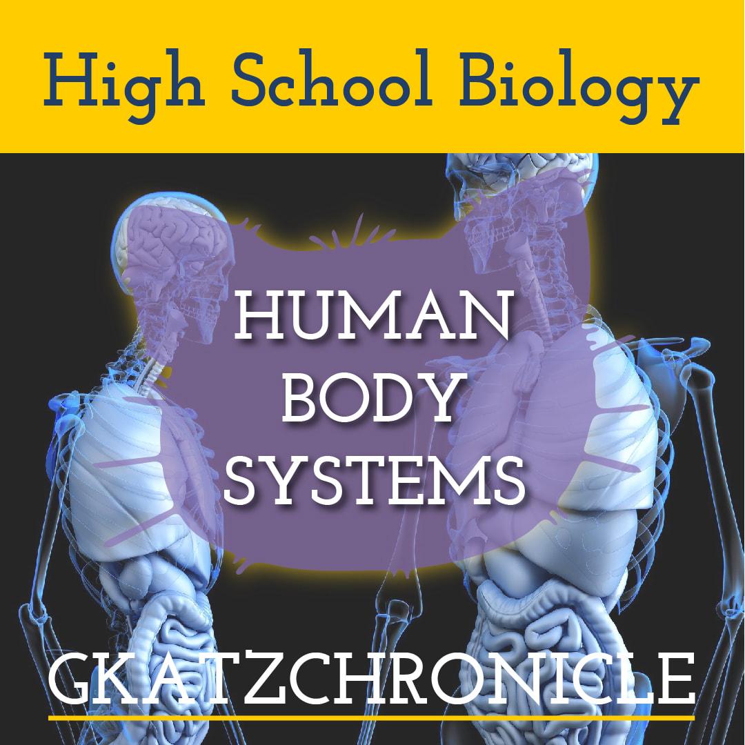 Human Body Systems Teacher Presentation Amp Matching Student