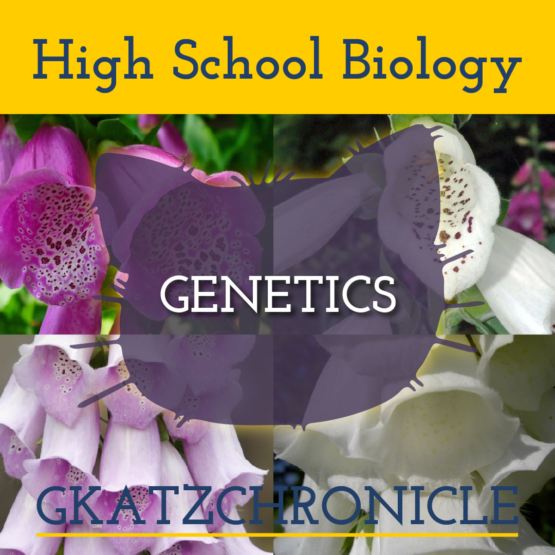 Elements Of Biology Genetics Video Worksheet