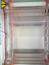 Auf-Spurensuche-im-Labor_Gelelektrophoresekammer-zur-Auftrennung-von-DNA-Fragmenten