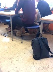 Gesamtschule Petershagen_Schulhund Simba stellt sich vor_5