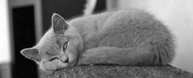 Katze Katzen LuLu