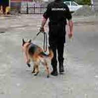 Cão de Guarda na Segurança Física