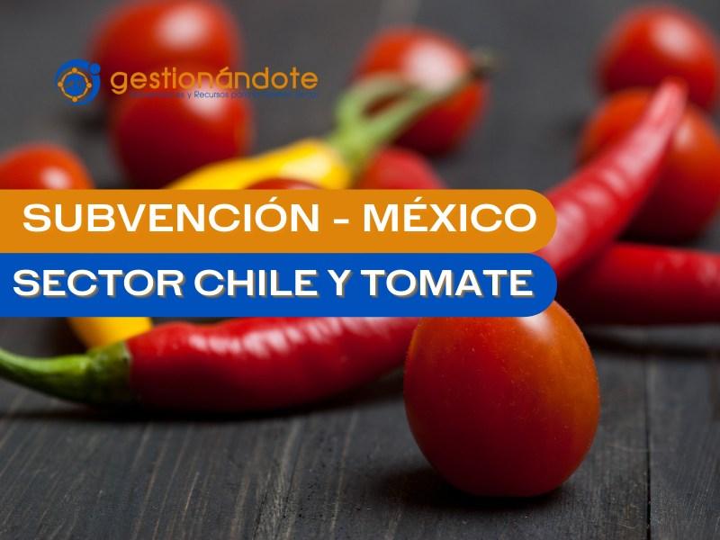 subvencion chile y tomate