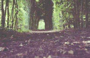 nature-forest-trees-path-medium