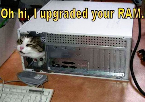 funnies upgraded ram cat