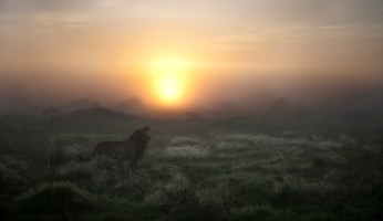 Lion in the mist by Frits Hoogendijk, Pretoria
