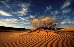 This tuft of grass looked stunning in the afternoon light on the sand dunes of the Kalahari's Witsand Nature Reserve. I laid down on my stomach to take the photo. - By Christiaan Mauritz van den Heever, Pretoria. Nikon D200, Sigma 10-20mm f3.5, ISO 100, f/8, 1/160 sec.