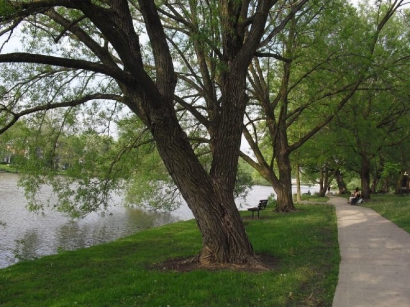 walking path with tree canopy along serene river