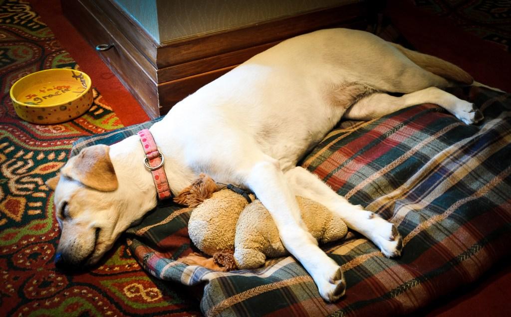 Fairmont Tremblant Canine Ambassador