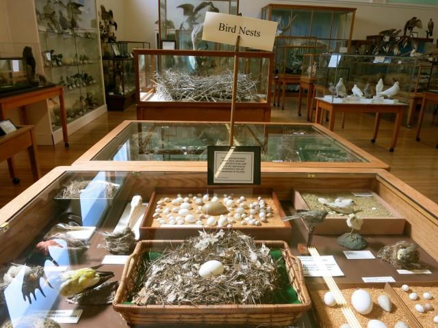 Libby Museum, Wolfboro, NH