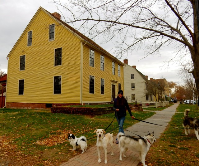 Wethersfield CT Historic District With Dogs