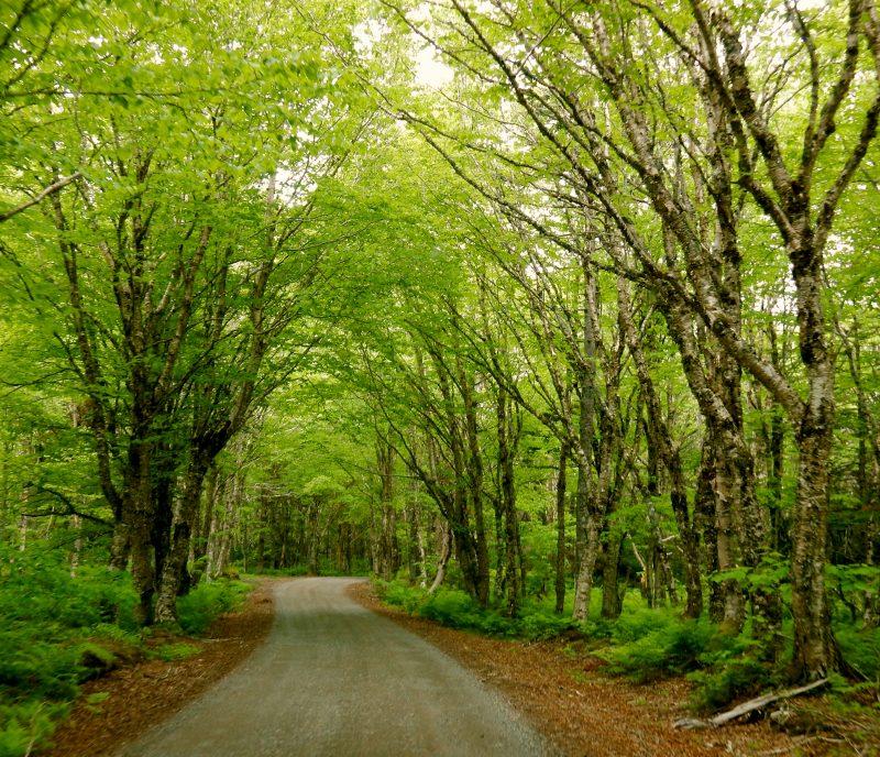 Natural Area, Campobello Island, Canada