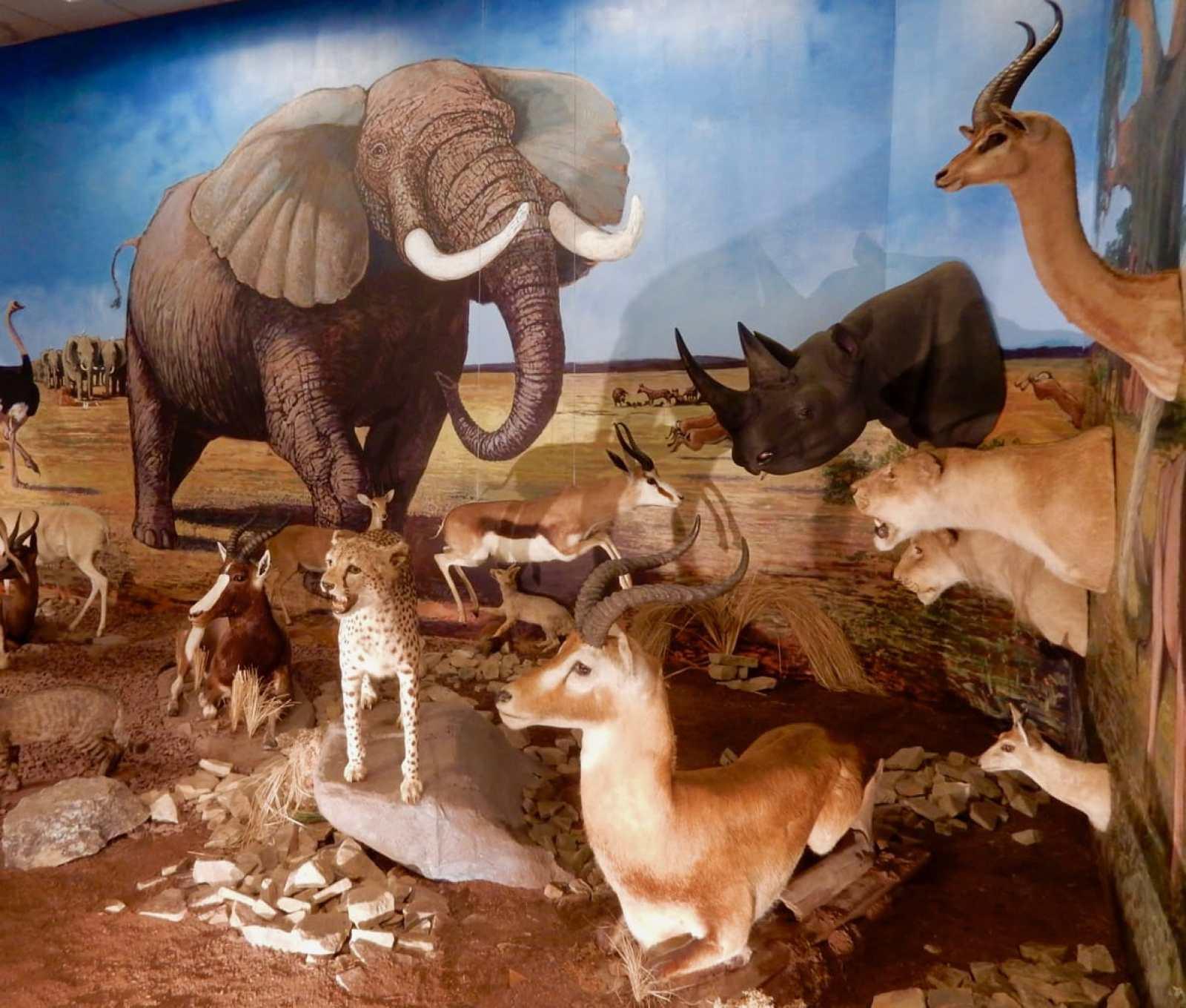 African Animal Diorama Nixon County Park Nature Center York PA