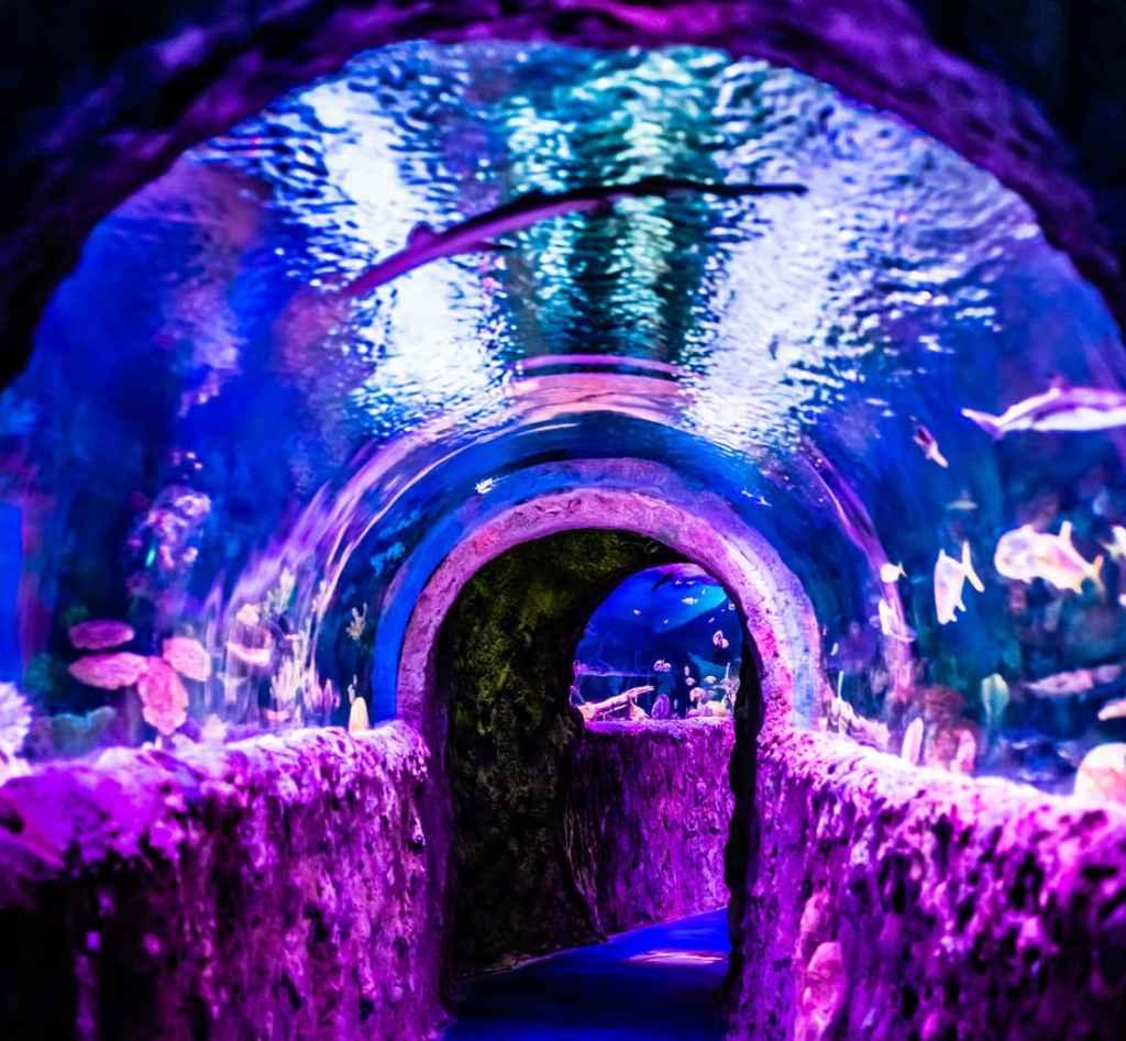 VIA Aquarium tunnel