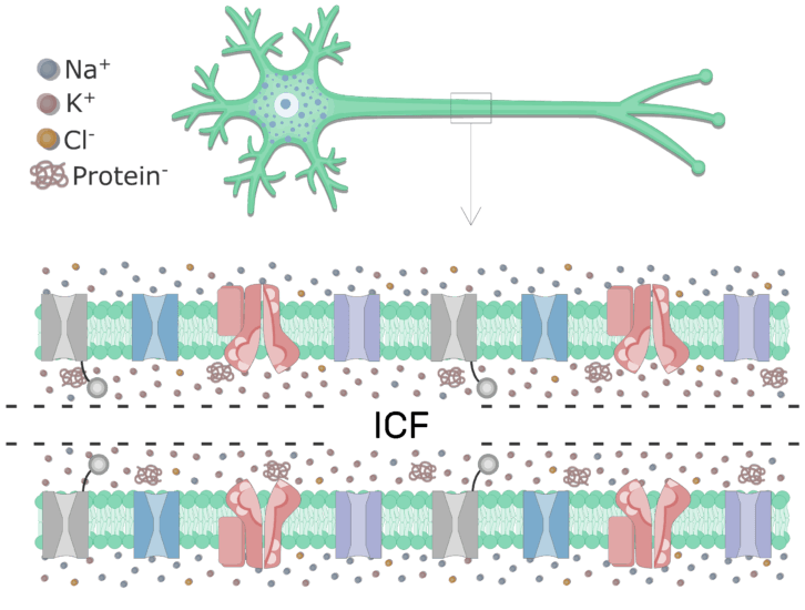 Introduction to Axons at Rest