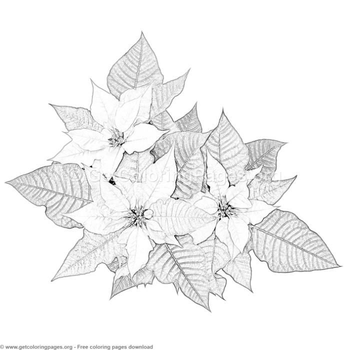 5 christmas poinsettia flower coloring pages
