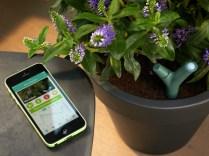 Parrot Flower Power Smart Plant Sensor