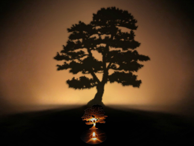 Lumen Tree Shadow Lamp. Plant a Tree in the Room.
