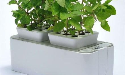 ZeroSoil Mini Indoor Garden Requires No Gardening Skills