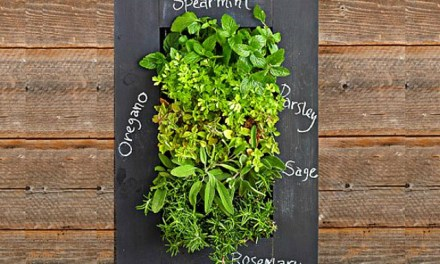Turn Your Wall Green with GroVert Living Wall Planter