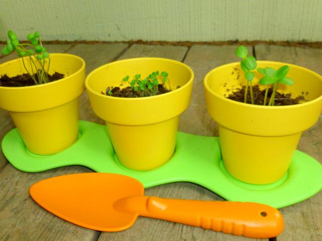Green toys indoor gardening kit for budding gardeners getdatgadget green toys indoor gardening kit for budding gardeners workwithnaturefo
