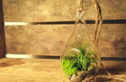 Green toys indoor gardening kit getdatgadget tillandsia bromeliads air plant with teardrop terrarium kit workwithnaturefo