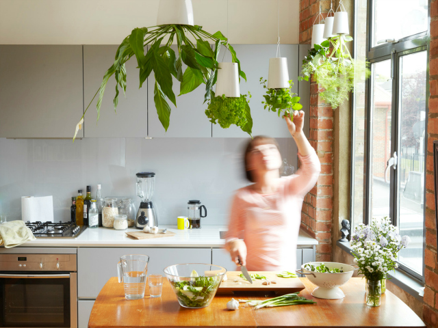 Enhance Your Home with Sky Planters