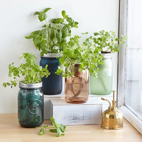 mason jar herb growing kit