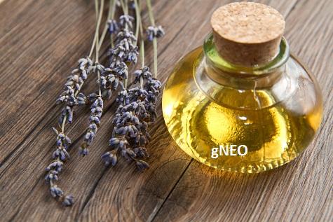 Organic Lavandin Grosso Essential Oil