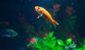 a fish in an aquarium