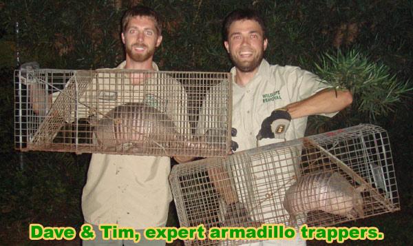 Professional Armadillo Trapper Directory