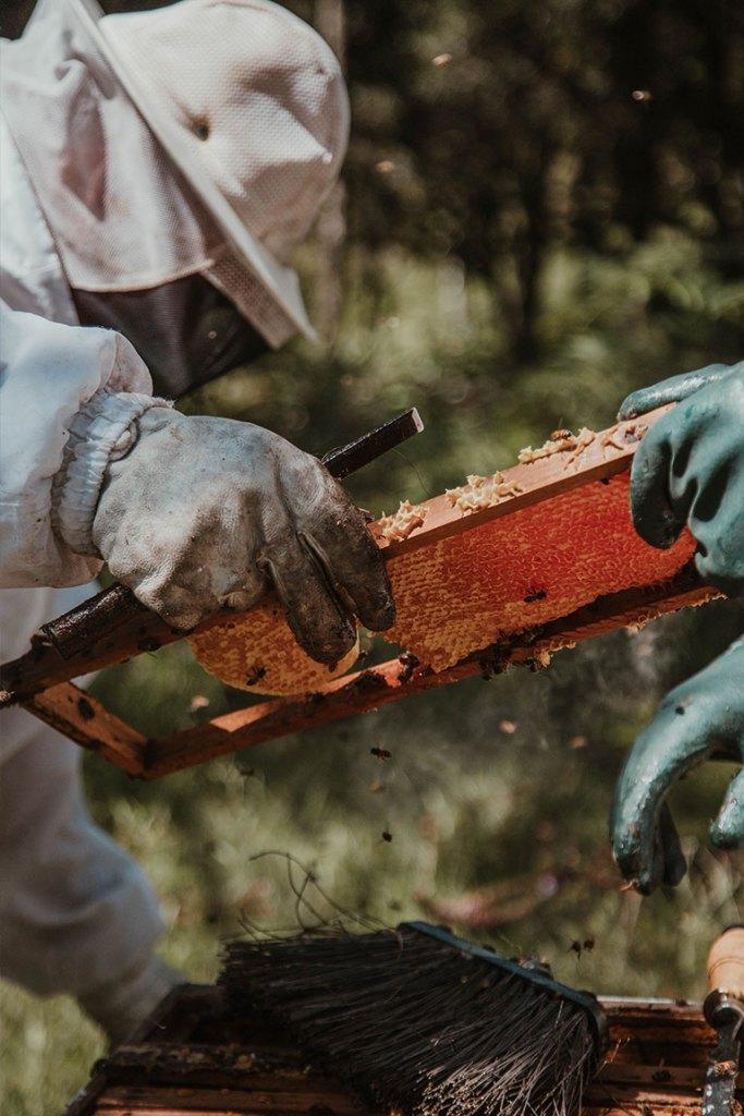 hive burning