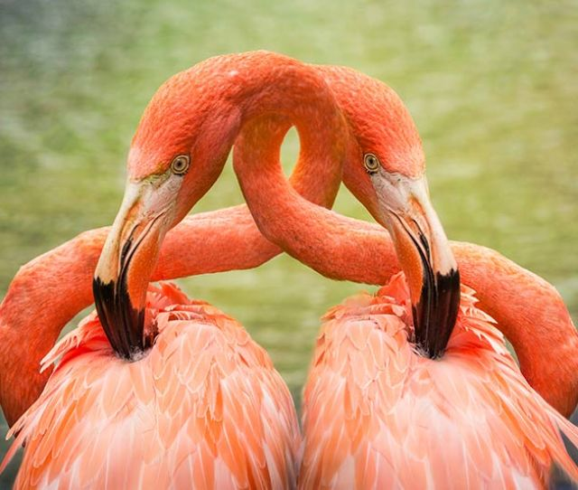 Freckles Flamingoes