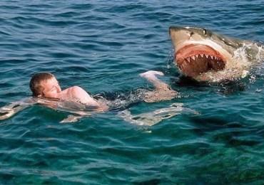 כרישים עליך עמלץ המדריך המקוצר לגולש לזהירות והישרדות מתקיפות