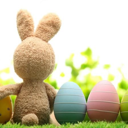 Easter Bunny April Fools 800