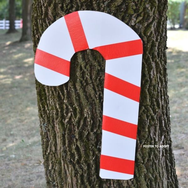 Santa Claus is bringing candy canes and the kids are going to have a scavenger hunt. Find the hidden spots!