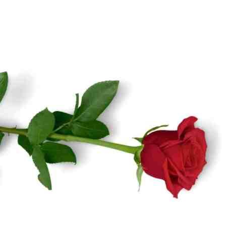 roses gift guide for bachelorette fans