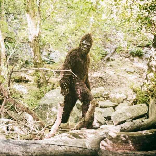 Bigfoot hashtags to use for finding Bigfoot and the Sasquatch.