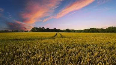 Farming, farm land