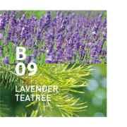 B09 LAVENDER TEATREE