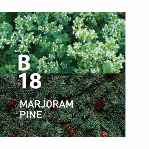 B18 MARJORAM PINE