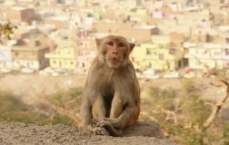 Jaipur13