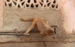 Jaipur15