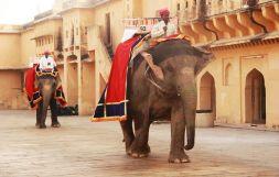 Jaipur26