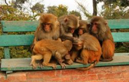 Katmandu98