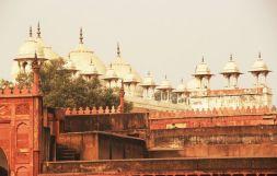 Agra29