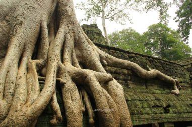 AngkorWatTapinaklari72